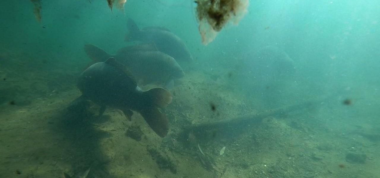 Обитанията на шарана през зимата | www.carpmojo.com